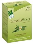 camelliaselect.jpg